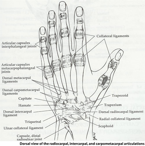 dr john e panet prolotherapy vancouver bc naturopathic   prolotherapy physician Diagram of Thumb Pain Torn Ligament in Thumb
